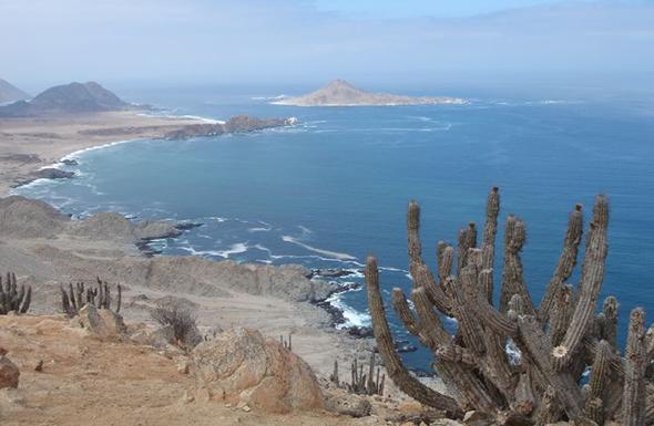 Sim, esta é uma imagem do Deserto do Atacama. Uma natureza exuberante em um ponto único do mundo. Foto de Aaron Bornstein, via Wikimedia Commons.